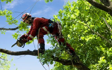 find trusted rated Raleigh tree surgeons in Devon