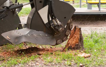 professional Raleigh stump grinding services