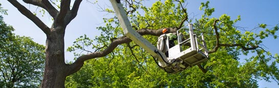 Raleigh tree surgery services