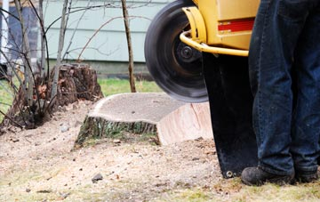 rated Raleigh tree stump removal companies