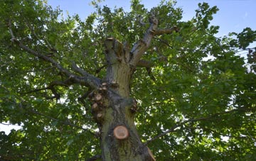 what is Raleigh tree surgery?