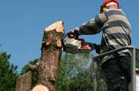 Raleigh felling services