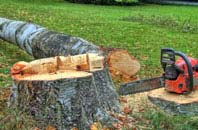 free Raleigh tree felling quotes