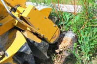 Raleigh tree stump grinding services