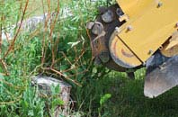 free Raleigh tree stump grinding quotes