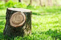Raleigh tree stump removal services