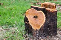 free Raleigh tree stump removal quotes